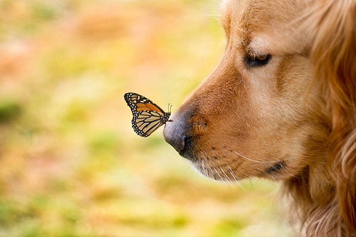 butterfly-cute-dog-dogs-Favim.com-424180_large