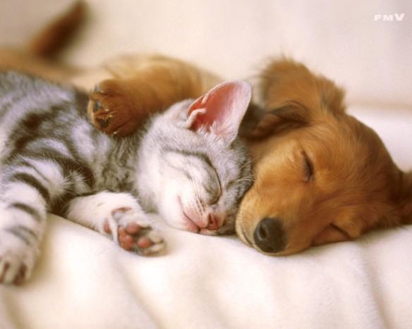 cute dogs 196